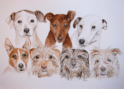 7 dogs jason harris