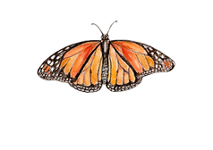 monarch.png