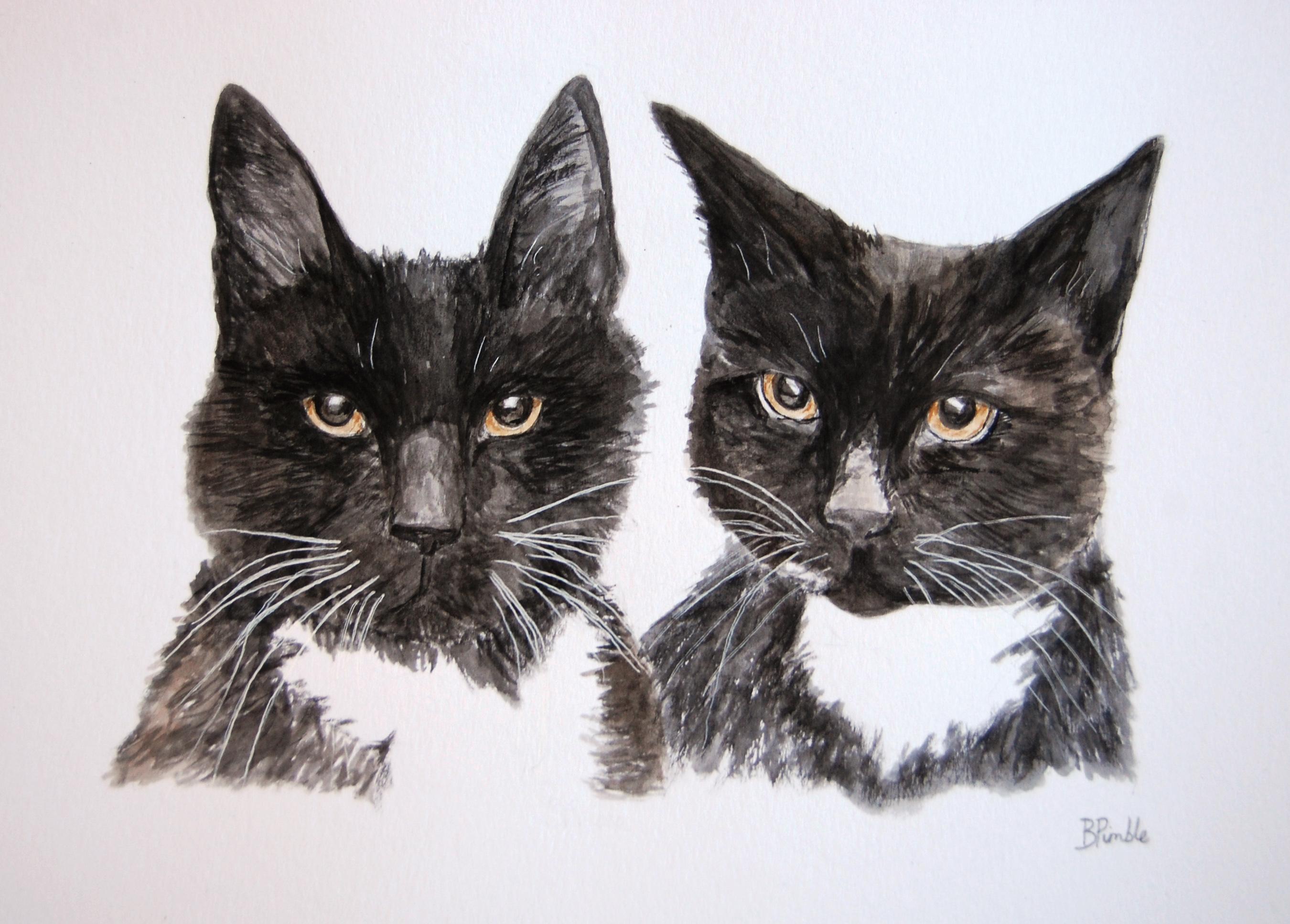 black cats moira margaret