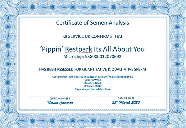 Pip Semen Analysis.png