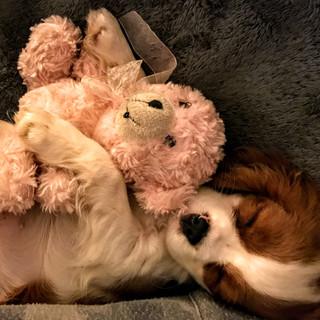 Love my teddy.