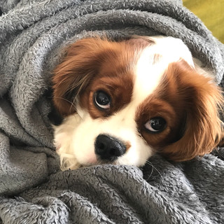 Snuggled up in a warm blanket.