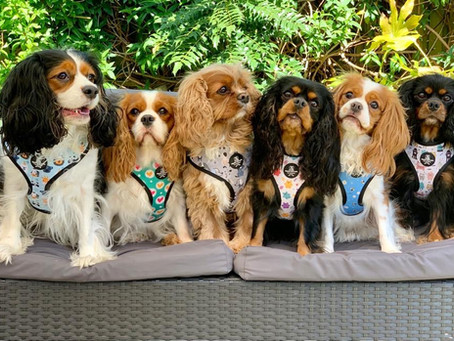 Introducing the Pawsome Team