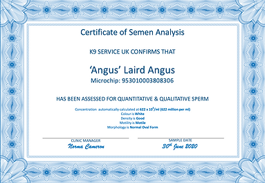 Angus Semen Analysis.png