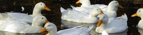 vitaankortestbild.jpg