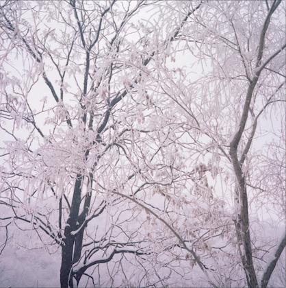 来自系列作品《被遗忘的栖居》| 甘莹莹 | 2015-18