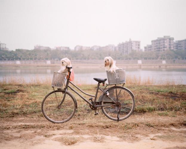 来自系列作品《海岸线》 | 张晓 | 2009-13
