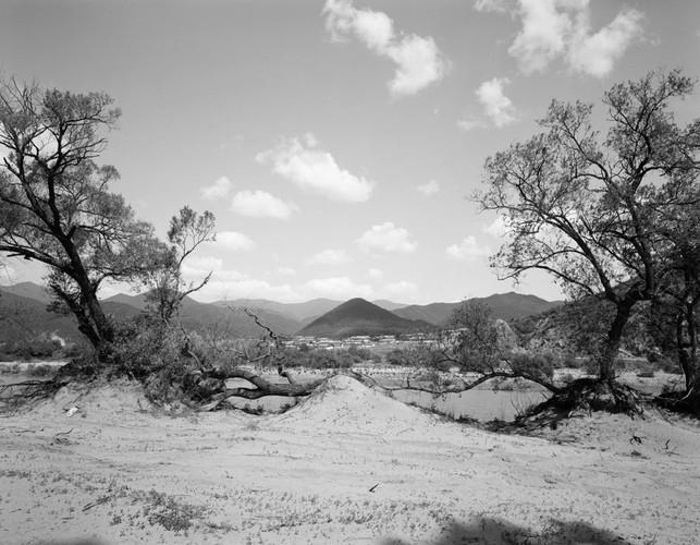 倒下的大树 | 沈学哲 | 2012