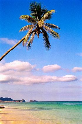 Beach Life 59