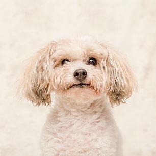 indoor pet photographer sydney.jpg
