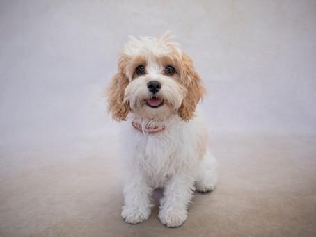 Dog Photos at Markets