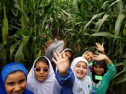 Forsythe Family Farms Trip: Walking through the Corn Maze