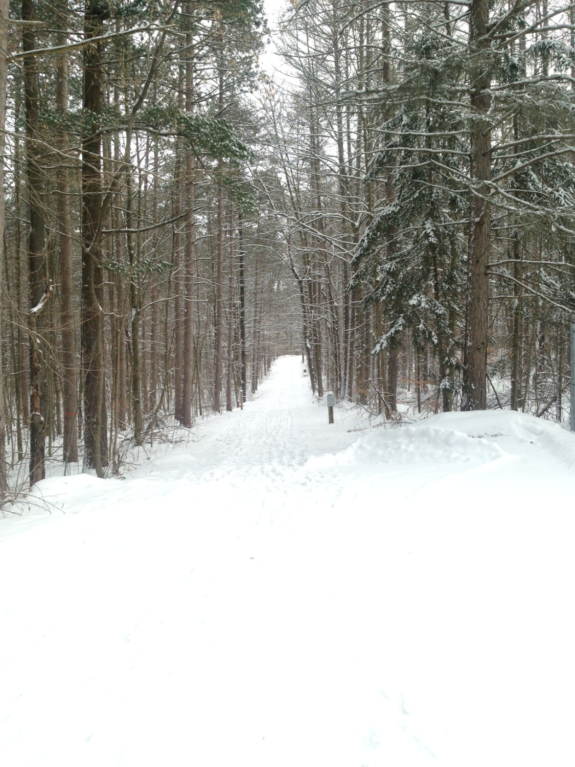 Snowshoeing at Hollidge Tract