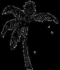 palm2_edited_edited_edited.png