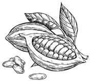 cocoa-vector-superfood-drawing-set-260nw-479726497_edited_edited.png
