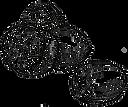 55131884-nutmeg-illustration_edited.png
