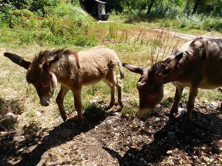 kids children donkey