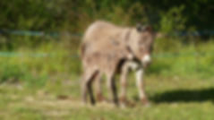 donkey family activities