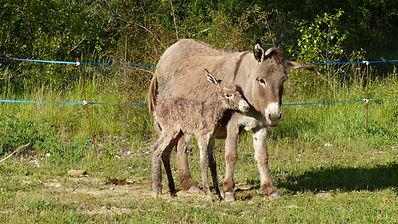donkey family activities
