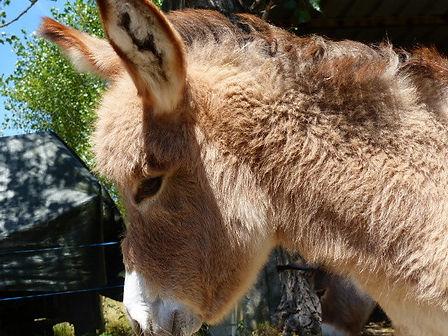 donkey rental activities kids