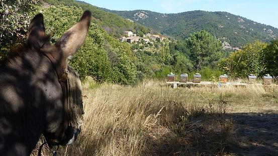 France ardeche donkey hike