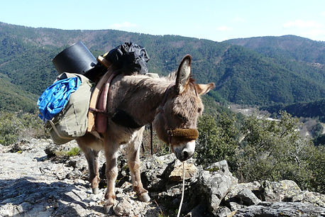 Hike in ardèche with a donkey