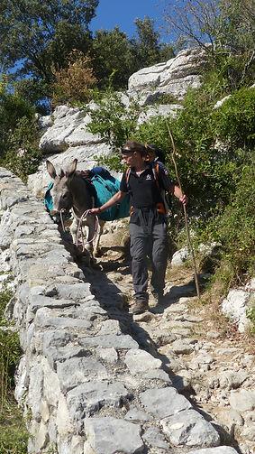 Walk with a donkey in ardeche