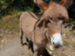 walk with a donkey ardeche