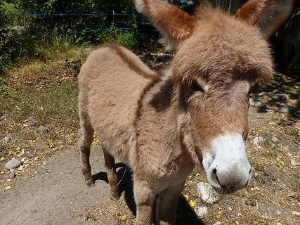 walk with a donkey ardeche