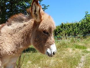 donkey tour ardeche