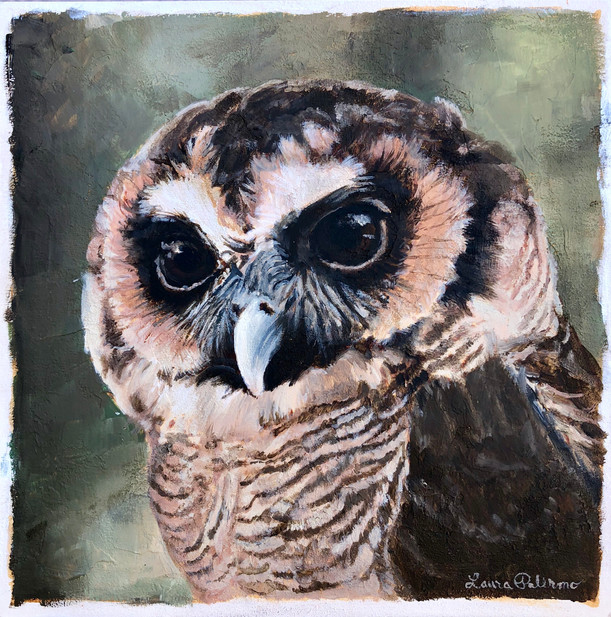 Asian Brown Wood Owl 10x10 Acrylic on Canvas