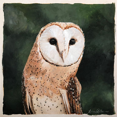 Barn Owl,owl,  birds of prey, wildlife, conservation, art, paintings by palermo, laura palermo, bird, portrait