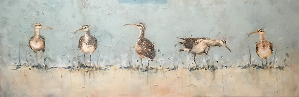 Bristle Thighed Curlew, endangered, bird, art, painting, charleston, declining, shorebird, conservation, Laura Palermo, paintings by palermo, nature, wildlife, pretty, curlew