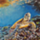 Laura Palermo, Paintings by Palermo, art, painting, sea turtle art, sea turtle, ocean, conservation, endangered, animal, scuba, underwater, Charleston, reef, colorful, nature, blue, South Carolina Aquarium, coral, a midday bask, Hawksbill