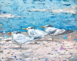 """Royal Terns"""