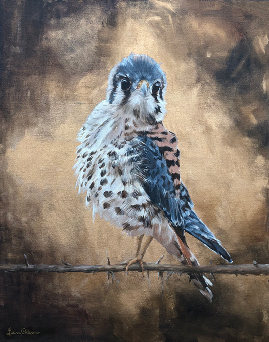 Keen Kestrel 30 x 24 Mixed Media on Canvas