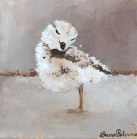 Piping Plover, shorebird, declining, wildlife, conservation, art, paintings by palermo, Laura Palermo, Piper