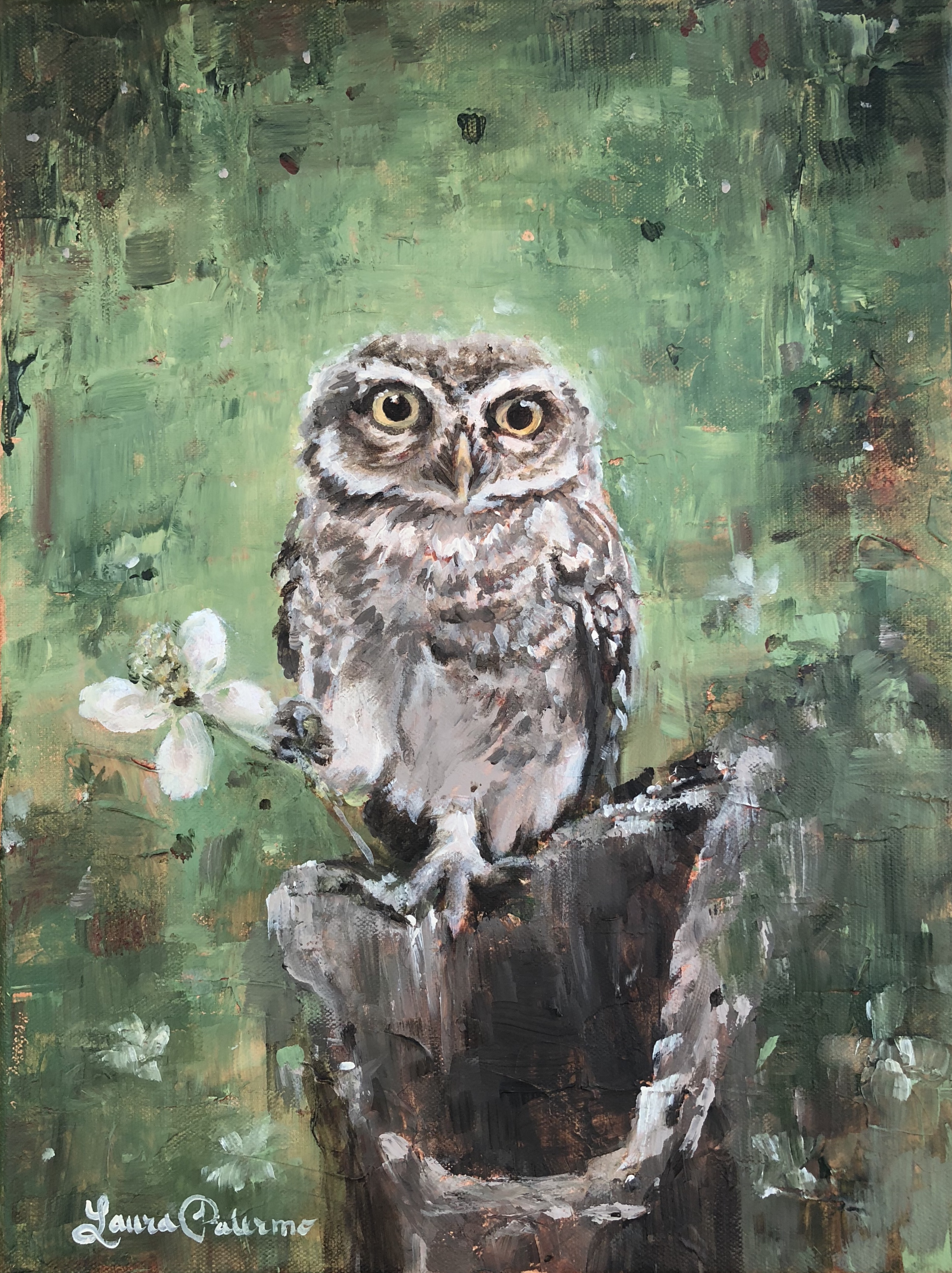 """Forest Owlet"""