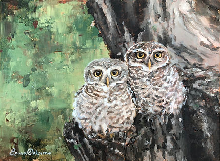 Forest Owlet, wildlife, conservation, art, owl, painting, endangered, inda, cute, paintings by palermo, laura palermo, birds of prey