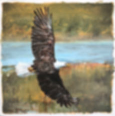 Bald Eagle, painting, bird, birds of prey, wildlife, conservation, art, america, soaring, vulnerable, paintings by palermo, laura palermo