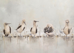 """Cropped """"Blue Footed Boobies"""" Gray"""