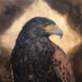 Harris Hawk, Hawk, falconry, gold leaf, painting, birds of prey, wildlife, conservation, art, paintings by palermo, Laura Palermo, bird
