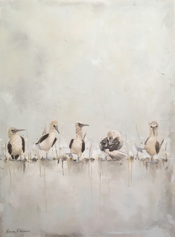 """""""Blue Footed Boobies"""" Gray"""