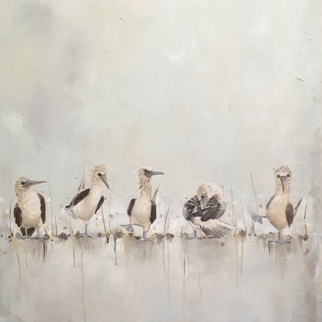 Blue Footed Boobies - Gray
