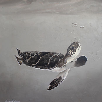 Laura Palermo, sea turtle art, sea turtle, endangered, conservation, sea turtle painting, baby turtle, black and white, painting, Charleston, hatchling, South Carolina Aquarium, ocean, scuba