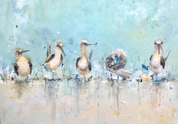 """Cropped """"Blue Footed Boobies"""" Blue"""