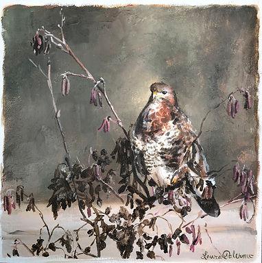 Buzzard, Hawk,  birds of prey, wildlife, conservation, art, paintings by palermo, laura palermo, bird, portrait