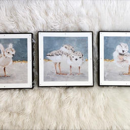 Piping Plovers