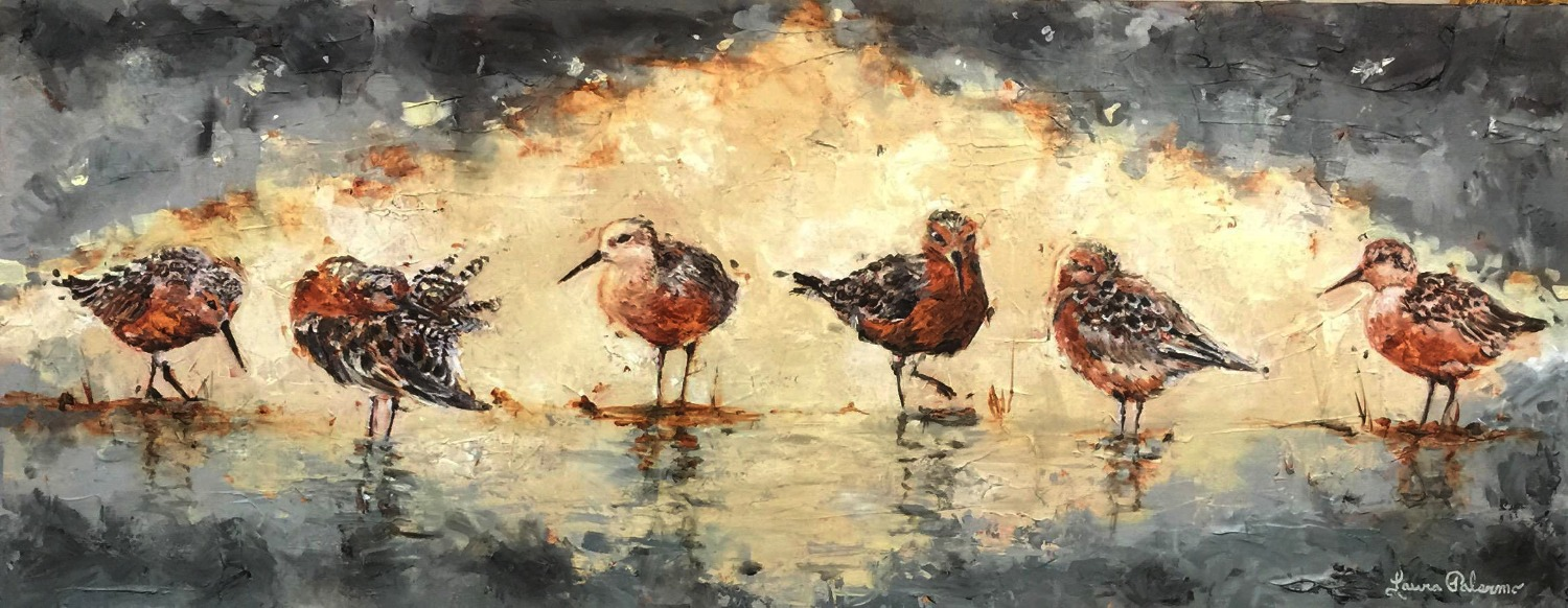 """Red Knots I"""