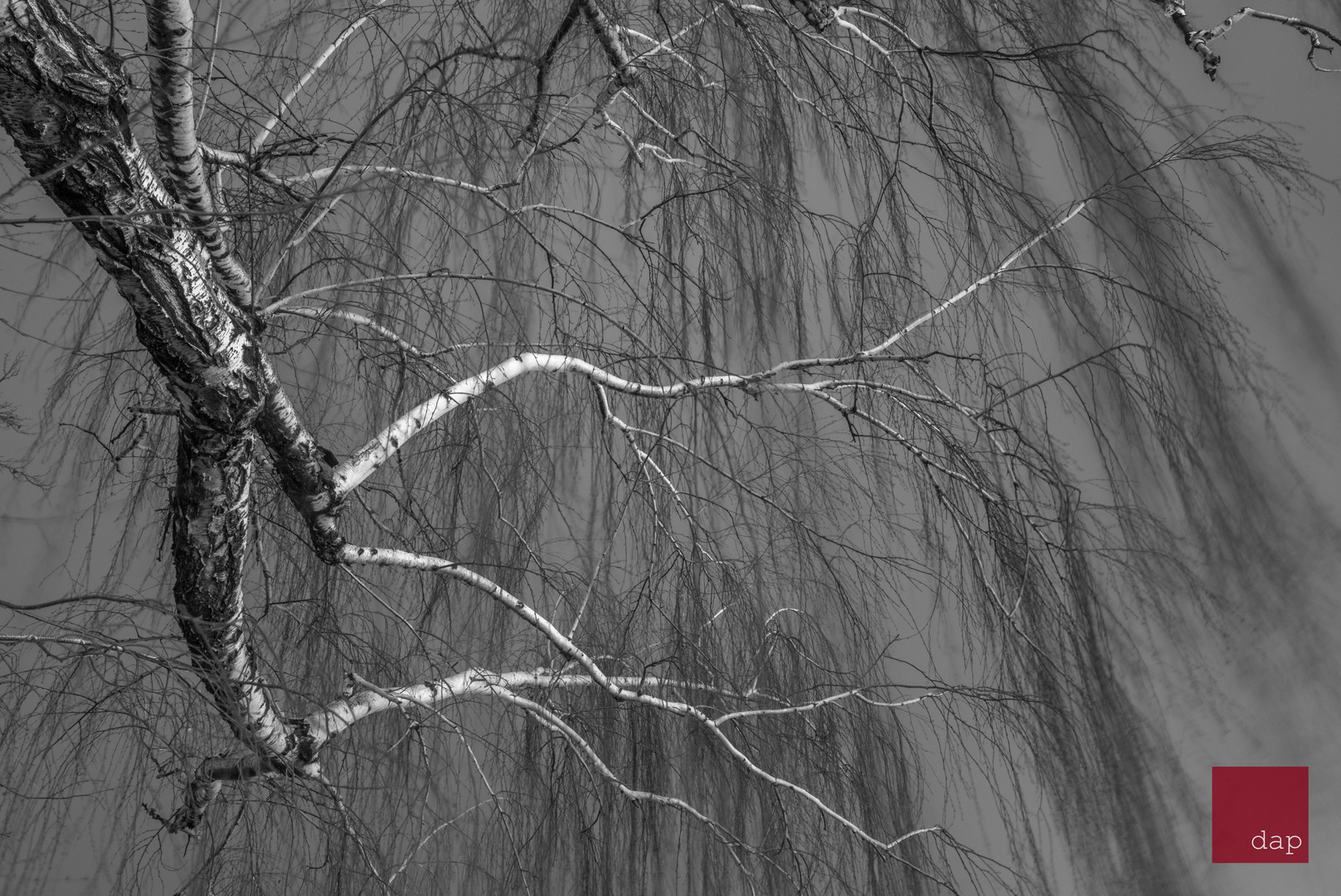 County Trees 027